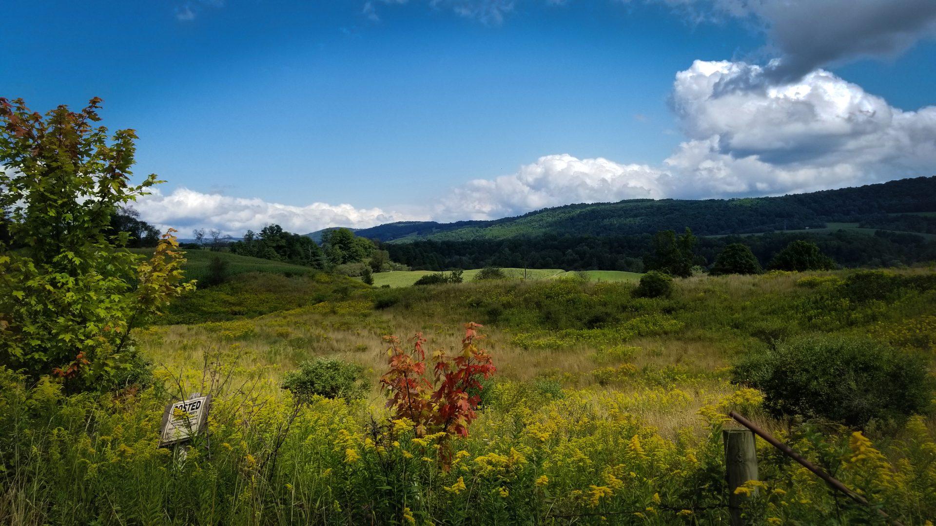 Farm Field Backdrop